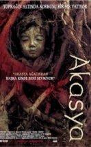 Acacia 2003
