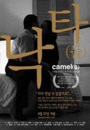 Camel 2002